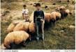 """Ercan Yolgiden - """"Çocuk Çobanlar"""""""